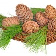 The composition of seeds and twigs of the Siberian cedar — Stock Photo