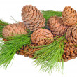 The composition of seeds and twigs of the Siberian cedar - Stock Photo