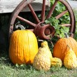 Pumpkins, Squash, Wagon Wheel — Stock Photo #6754361
