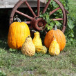Pumpkins, Squash, Wagon Wheel — Stock Photo
