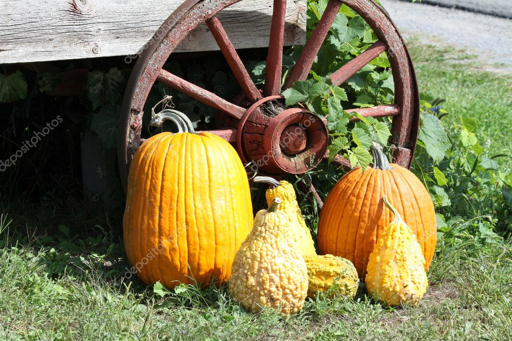 A mixture of different types of Squash beside an old, wooden, rustic wagon wheel — Stock Photo #6754361