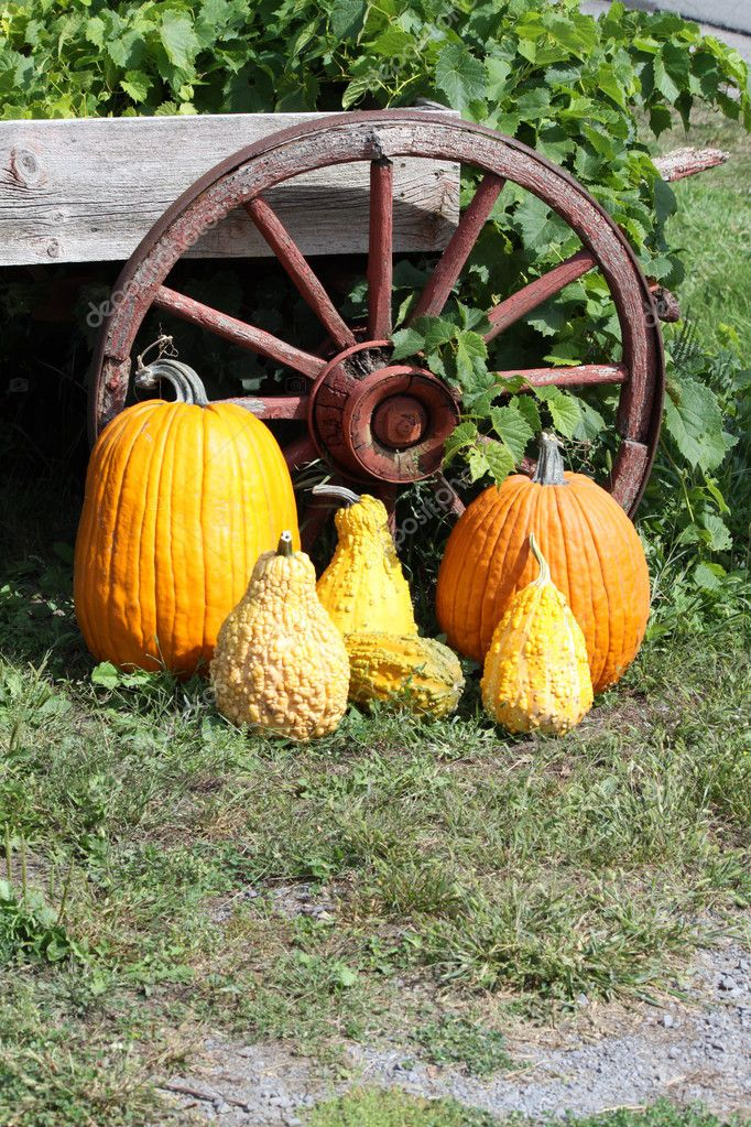 A mixture of different types of Squash beside an old, wooden, rustic wagon wheel  Stock Photo #6754385