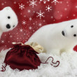 White bear on snow at Christmas — Stock Photo #7546198