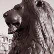 Lion of Nelsons Column; London — Stock Photo