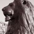 Stock Photo: Lion of Nelsons Column; London