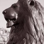Lion of Nelsons Column; London — Stock Photo