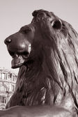 Lion of Nelsons Column; London — Foto Stock