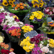 Stock Photo: Bunches of Flowers