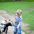 Feeding a goat — Stock Photo