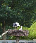 Stork family — Stock Photo