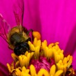 Flower and busy honey bee — Stock Photo #6893957