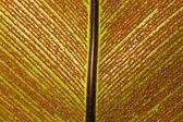 Backgound - Bird-nest fern and spore — Stock Photo