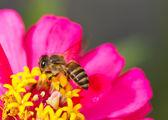 Blomma och honey bee — Stockfoto