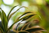 緑と白の葉 — ストック写真