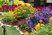 Flower display — Stock Photo