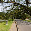 Stock Photo: Raintree and the road