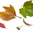 Autumn leaves isolated on white - Stock Photo