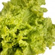 Green leaves lettuce — Foto de Stock