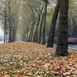 Path in autumn — Stockfoto #7648165