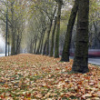 Stockfoto: Path in autumn