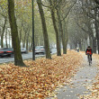 Stock Photo: Bicycle path in Brussels