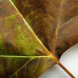 Background from fallen leaf closeup — Stock Photo