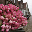 Holland, Volendam village (Amsterdam), fake tulips — Stock Photo
