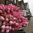 Holland, Volendam village (Amsterdam), fake tulips - Stock Photo