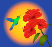 Hibiscus and humming bird — Stock Vector