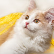 Little cat on a white background — Stock Photo #7189727