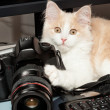 Little cat with a camera - Stock Photo