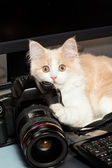 Little cat with a camera — Stock Photo