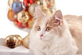 Kitten with Christmas Decorations — Stock Photo