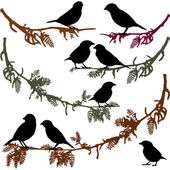 Birds on branch tree vector illustration — ストックベクタ