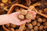 Fresh walnuts — Stock Photo