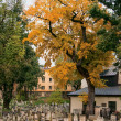 Autumn in a Jewish cemetery — Stock Photo