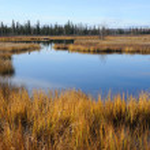 Alaska Arctic Wetland — Stock Photo