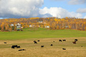 Alaska Cattle Ranch in Fall — Foto Stock