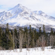 Stock Photo: Peak in the Alaska Range in the Spring