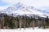 Peak in the Alaska Range in the Spring — Stock Photo