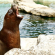 Seal on a cliff — Stock Photo #6963457