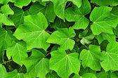 Helder groene bladeren achtergrond — Stockfoto