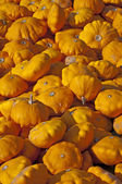 Patisson squash — Stock Photo