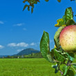 Apple with landscape — Foto Stock