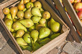 Pears in a box — Stock Photo