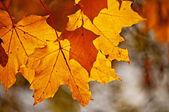 Осенний Цветной покидает в спине свет — Стоковое фото