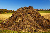Dung heap — Stock Photo