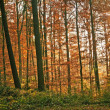 Autumnal painted forest - Stock Photo