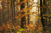 Autumnal painted forest — Stock Photo