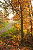Autumnal painted forest with way — Stock Photo